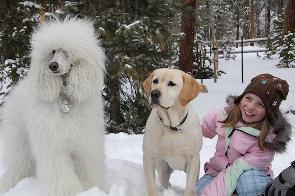 Un bianco Natale per Zeus (2010) – The Dog Who Saved Christmas Vacation